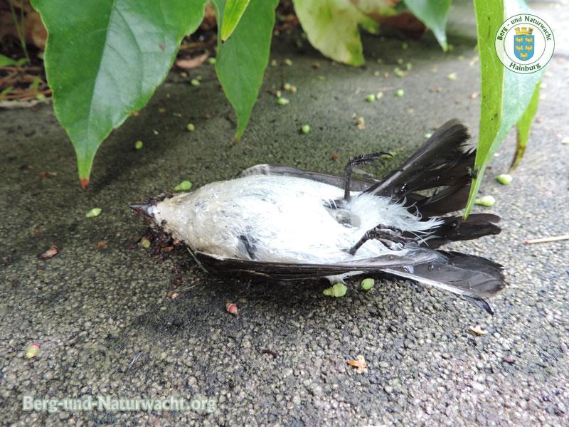 Vogelschlag gegen Spiegel im Freien | Foto: Berg-und-Naturwacht.org