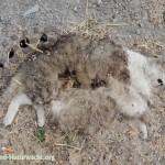 verendete Katze im Straßenbankett | Foto: Berg-und-Naturwacht.org