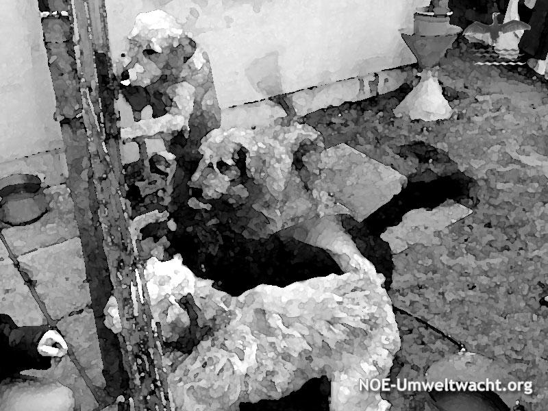 Dieses Hunderudel führte die Attacke auf den kleinen Mischling aus | Foto: NOE-Umweltwacht.org