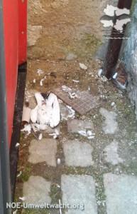 Fund einer verendeten Taube in Hainburg | Foto: NOE-Umweltwacht.org