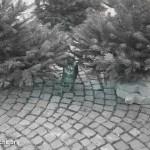 Hauskater attackierte Taube | Foto: NOE-Umweltwacht.org