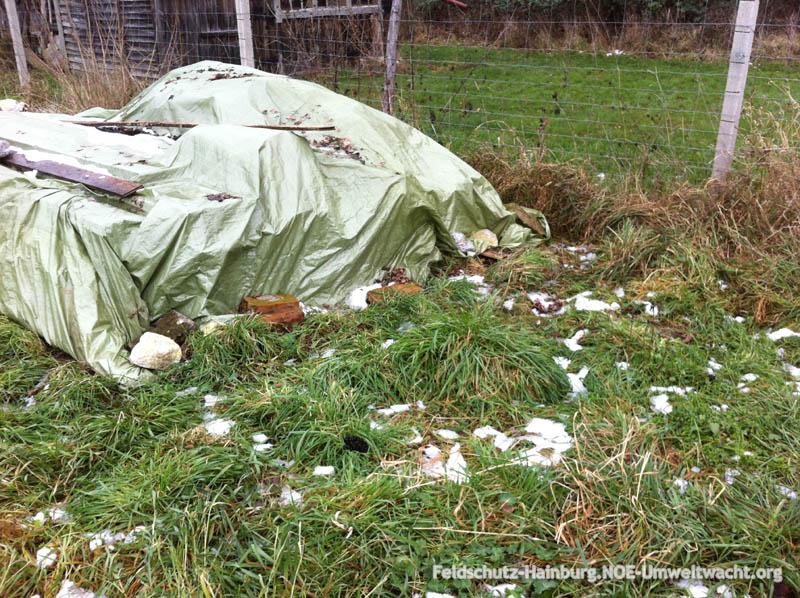 In diesem Bereich hat sich der verletzte Rehbock mit seiner Geiß zurückgezogen | Foto: NOE-Umweltwacht.org