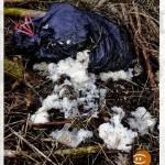 BezirksBlätter über Fund von Schlachtabfällen durch NÖ Umweltwacht