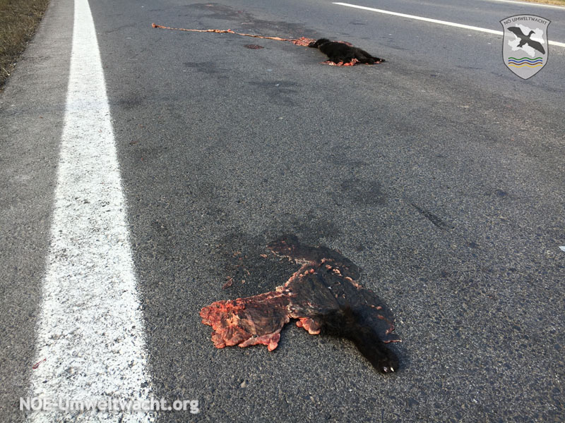 Meldung über tote Katze auf B9 | Foto: NOE-Umweltwacht.org