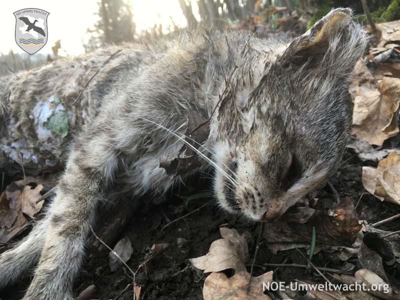 tiefgefrorene Katze illegal im Natura 2000 Schutzgebiet entsorgt | Foto: NOE-Umweltwacht.org