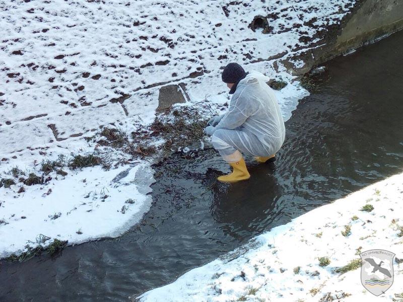 Verdachtsfall auf Vogelgrippe | Foto: NOE-Umweltwacht.org
