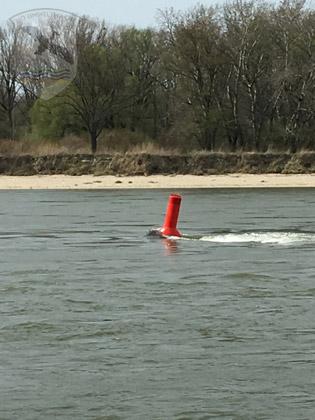 Boje im Donaustrom | Foto NÖ Umweltwacht
