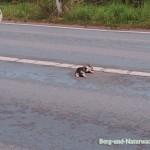 Resultat einer Kollision zwischen Katze und Kraftfahrzeug   Foto: Berg-und-Naturwacht.org