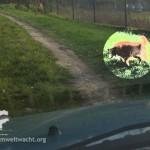 streunenden Hund erwischt | Foto: NOE-Umweltwacht.org
