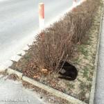Meldung über tote Katze | Foto: NOE-Umweltwacht.org